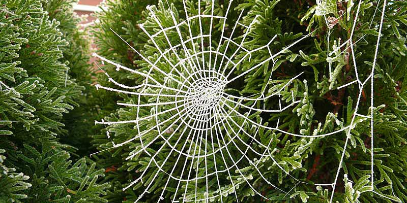 A Ukrainian spiderweb Christmas tree decoration.