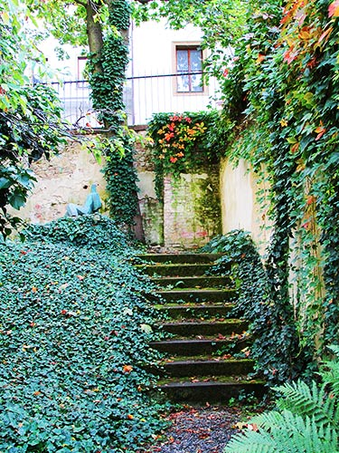 Leaf-draped steps in the walled courtyard garden at Sternberg Palace.