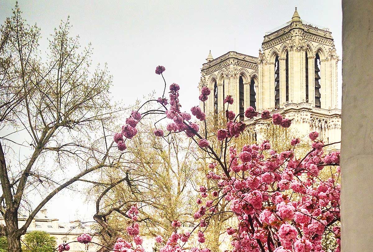 Notre Dame de Paris, with cherry blossoms, seen through the upstairs window of Shakespeare & Co., the iconic bookstore on the Rive Gauche, right across the river from the magnificent cathedral. travel wish list