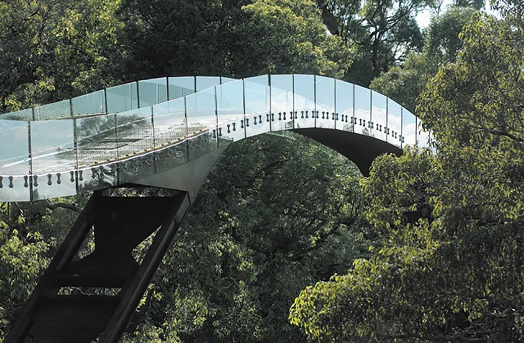 The glass-and-steel arched walkway traversing the tops of the eucalayptus trees in Perth's Kings Park.