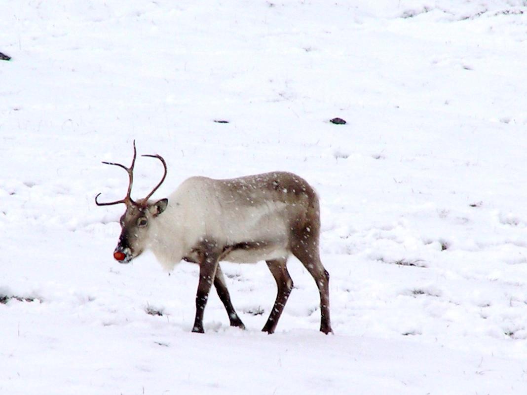 Rudolph on UXmas
