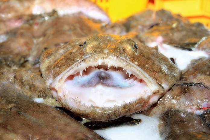 The Ultimate Guide to Monkfish 3
