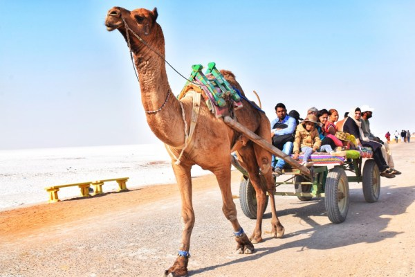 Camel Ride at Great Rann of Kutch