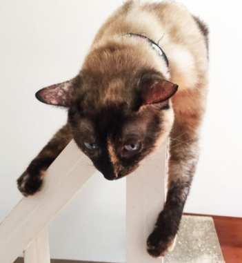 Actobat Crumbs & Whiskers Cat Cafe