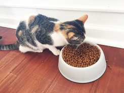 Hungry Kittie Crumbs & Whiskers Cat Cafe