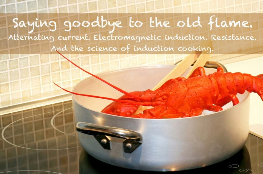 induction cooking a lobster - no flame