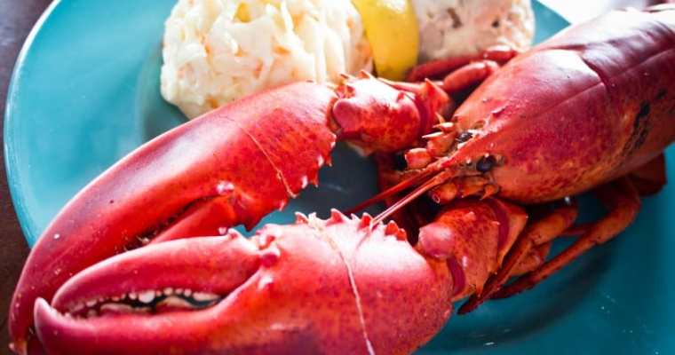 The Ultimate Lobster Experience Vancouver | Chef Matt Dean Pettit