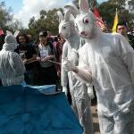 conigli pasquali al corteo