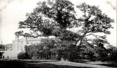 The Majesty Oak with the mansion in the background circa 1910
