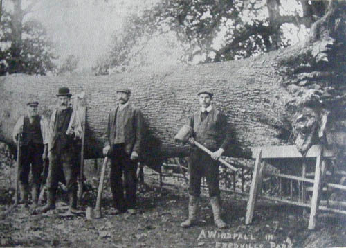 Fredville woodmen cutting timber:Jubal Moody-Mr West-Jim Sutton-L Moody