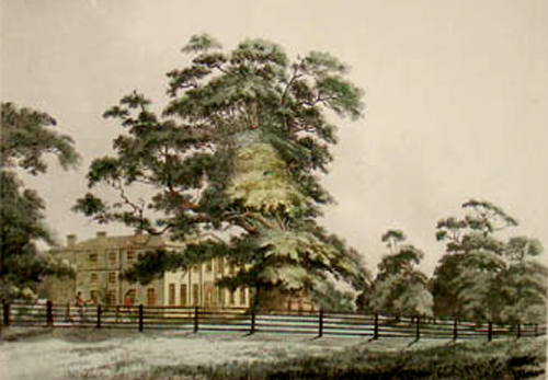 Fredville House and the Majesty Oak circa 1800