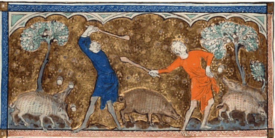 Swineherds beating down acorns for their pigs-Queen Mary Psalter, 1310-1320.