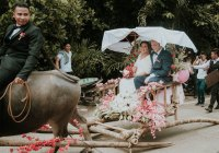 Carabao Carroza as wedding vehicle in Bingawan Iloilo