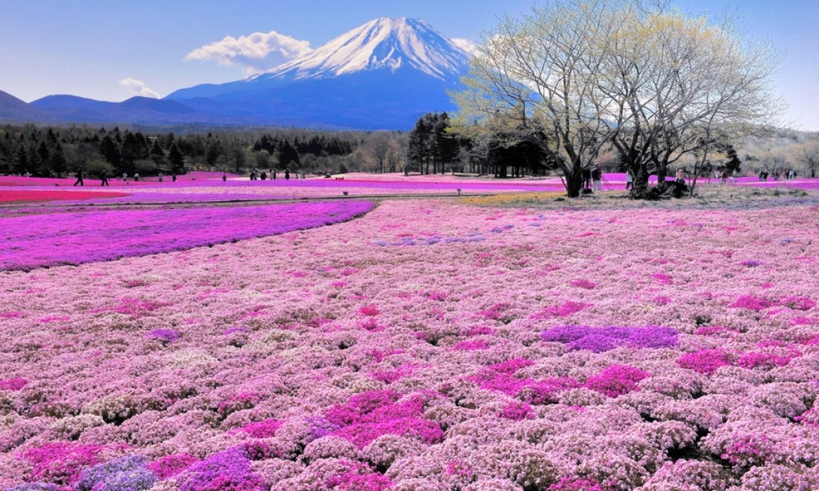 Where to Go in Japan: 3 Places to Visit in 2017