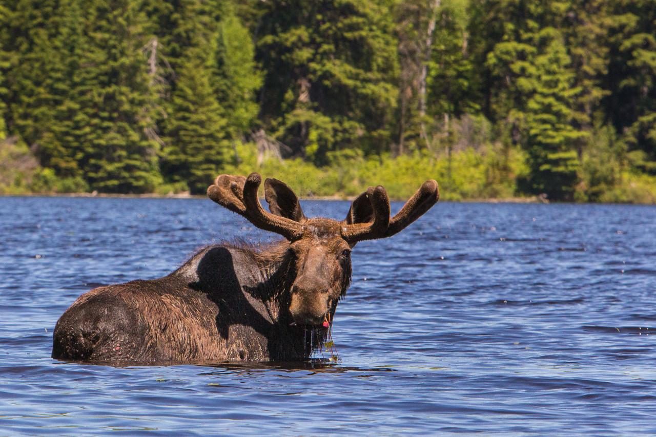 Canadian Safari
