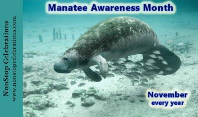 November is Manatee Awareness Month