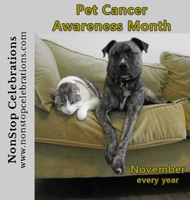 Pet Cancer Awareness Month reminds us pets get cancer too