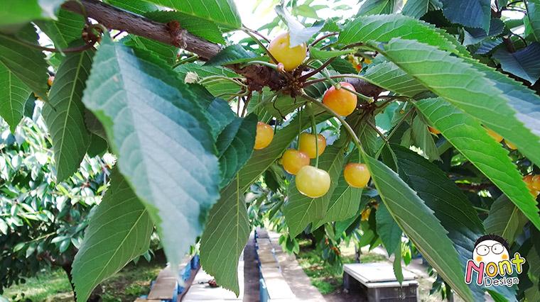 Yamamoto Sightseeing Orchard