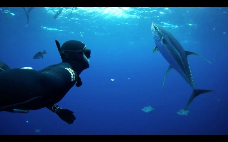 Cameron Kirkconnell Yellowfin Tuna