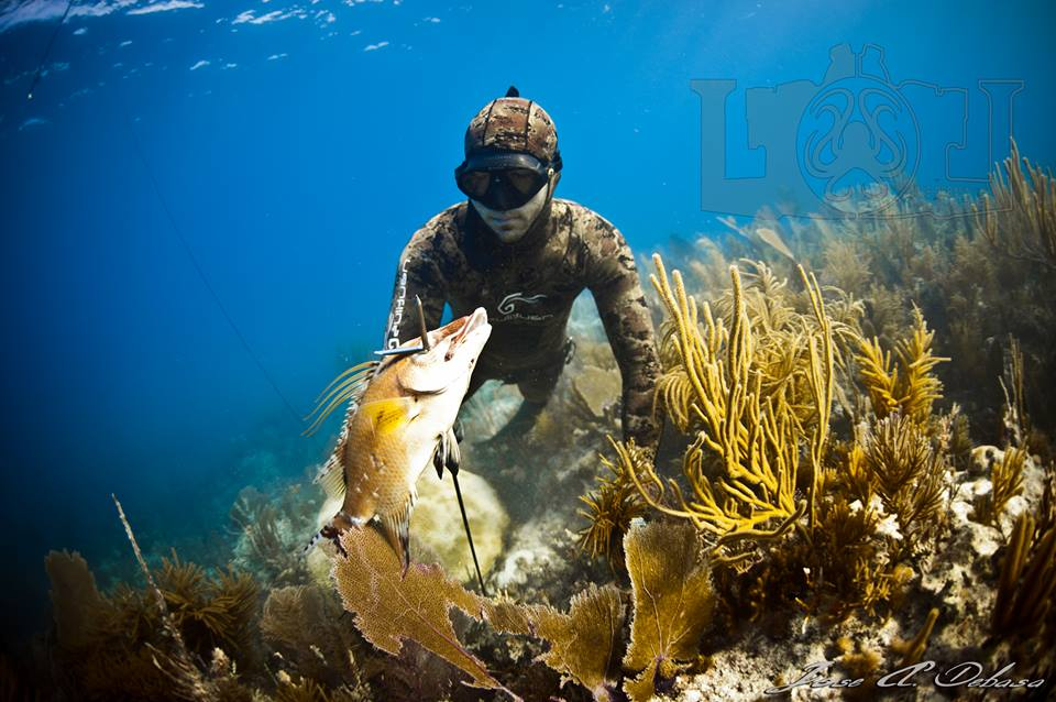 Spearfishing Hogfish with Andrew Quincoses
