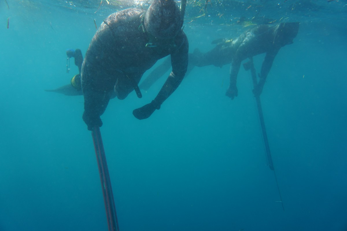 Relax on the surface. Take the time to breath up and focus. 101 Spearfishing Buddy Protocol