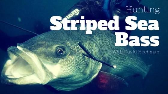 Hunting Striped Sea Bass with David Hochman