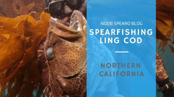 Spearfishing California – Ling Cod