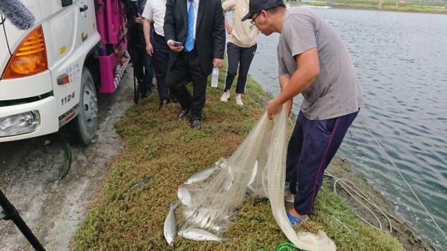 台南虱目魚產地價直直落,已不敷成本。記者鄭惠仁/攝影