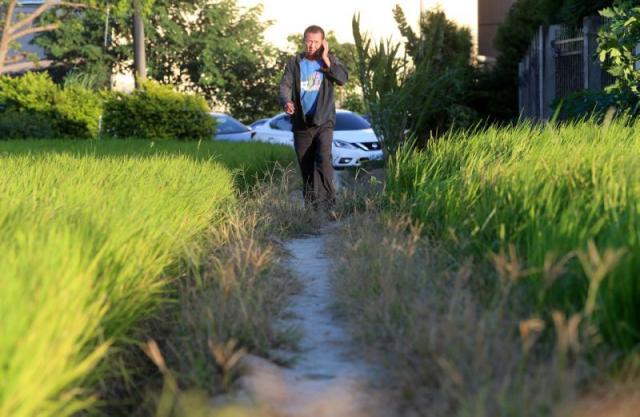 水利署昨宣布桃園、新竹、苗栗地區部分二期稻作即日起停止供灌,農委會將研擬相關配套措施,補償受影響的農民。記者胡經周/攝影