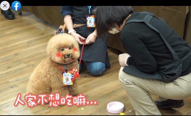 蔡英文總統親自製作毛小孩年菜,試吃狗狗把小黃瓜挑出拒吃,讓現場工作人員笑成一片。圖/翻攝蔡英文臉書