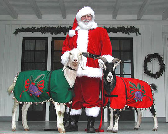 Santa and two of his rein-goats at historic Stow House in Goleta.