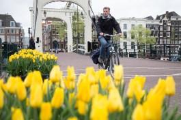 Tulpen und Fahrrad