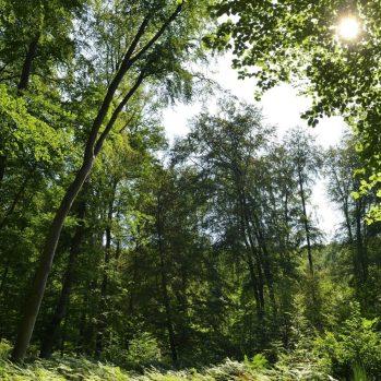 Forêt de Compiègne, © Hervé Hughes