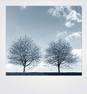 Card Blue trees #20002-min