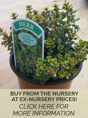nursery-tiles-pricing