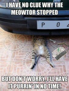 1573214063-funny-cat-repair-car-engine1