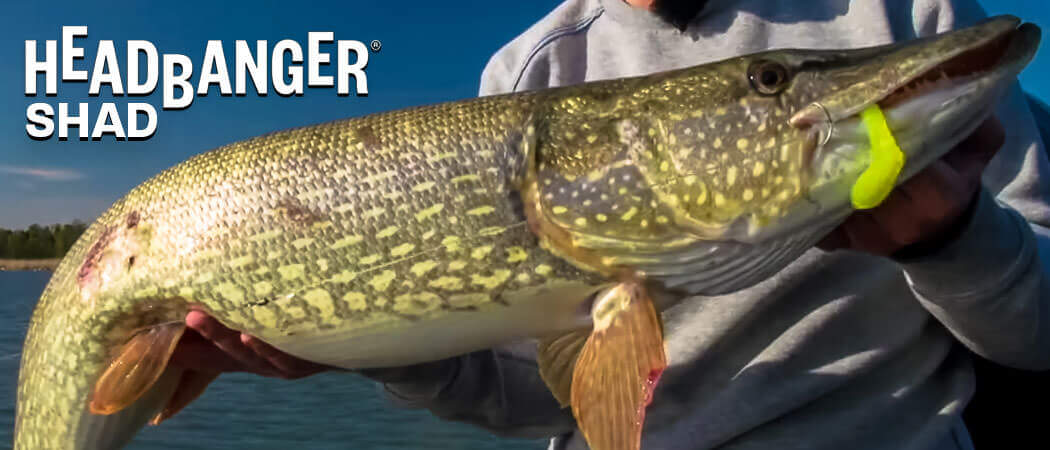 Headbanger Shad | North Bay Outfitters