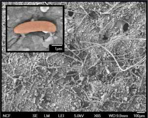 Electron microscope view of the dust collected from a door frame. Photo credit: Noah Fierer