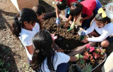 Kids play with and learn about soil in a California School Garden Network garden.