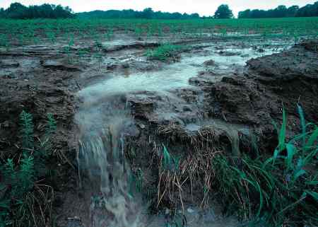 This is an example of run off from a farm field, in this case in Iowa, washing what's called non-point pollution into a waterway. North Carolina's current nutrient-management rules require controls on this type of pollution, which can also include nutrient-laden water washing from animal farms and developed land. Municipal wastewater plants, easily identified as potential sources of nutrient releases into waterways, are called point sources. Source: USDA