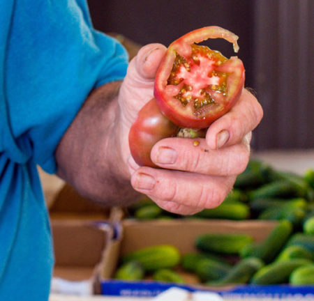 A farmer slices open a tomato. Farmers have been affected by the coronavirus pandemic ripple effects
