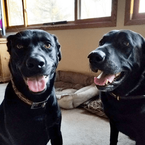 moxie-and-gunner