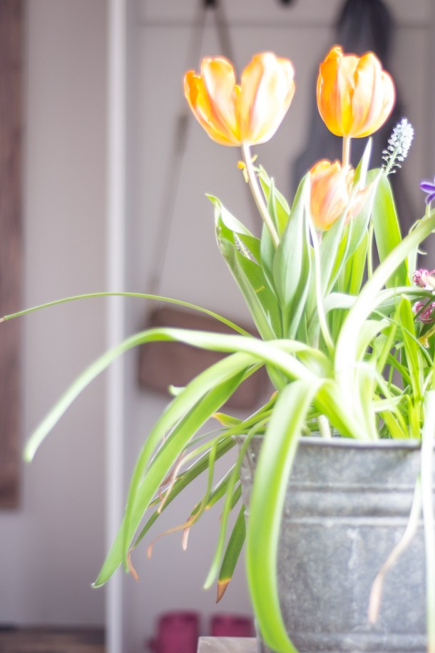 spring entryway home tour with tulips in galvanized bucket