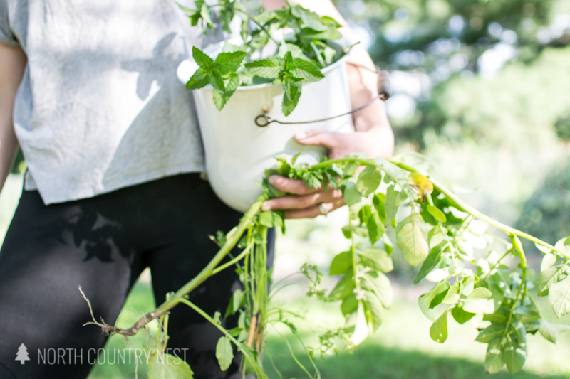 Gardening for Beginners: 10 Common Questions, Answered