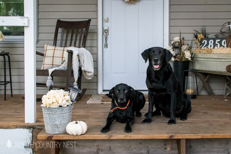 two black labs on front porch