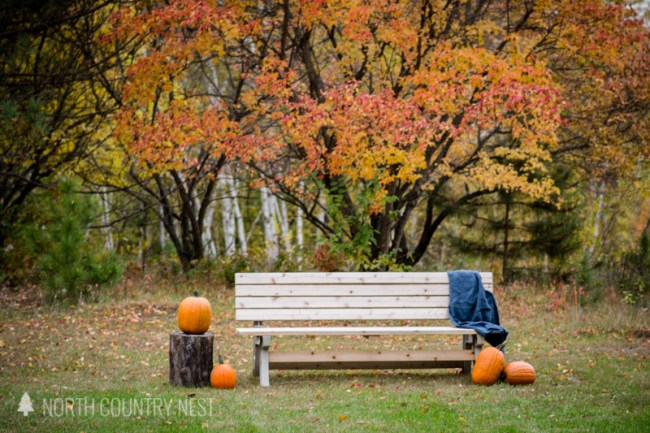bench with pumpkins in the fall