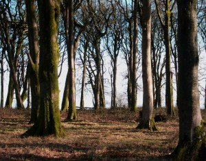 Image of a wooded conservation area
