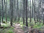 Maine Appalachian Trail hike near the end of the 100-Mile Wilderness