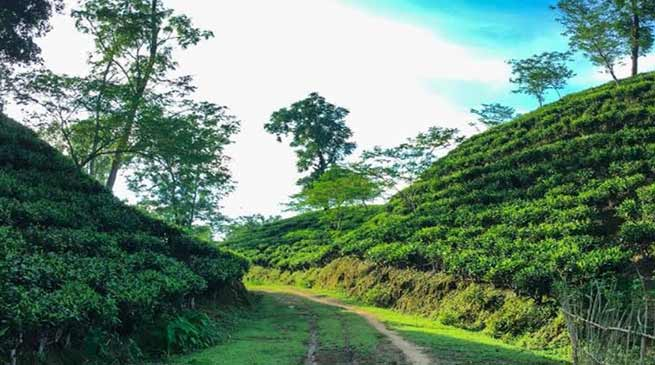 Assam: Ensure last-mile delivery of schemes, DC Hailakandi tells tea garden managers