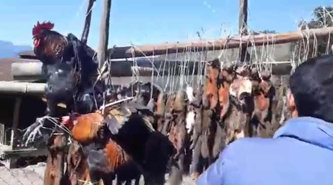 A video of wild animal hunting in Arunachal Pradesh, is goes viral on social media